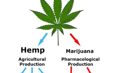 Is hemp the same as marijuana?