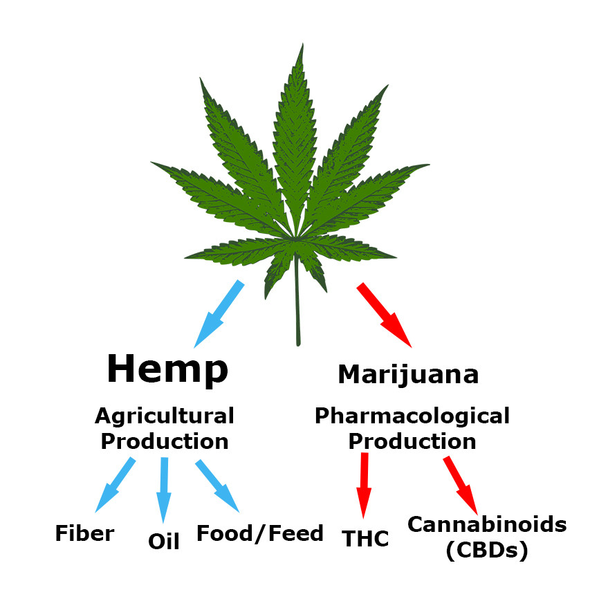 Is hemp the same as marijuana?