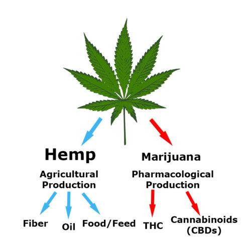 Is hemp the same as marijuana